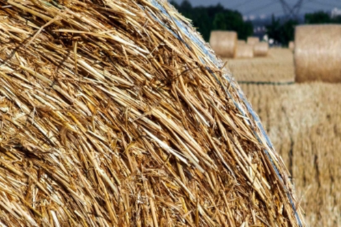 Are biofuels the next big opportunity?